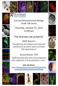 CDB Chalk Talk: Granato Lab @ Zoom