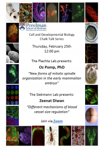 CDB Chalk Talk: Plachta / Siekmann Labs @ Zoom